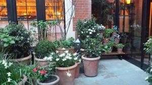 chilternflowers