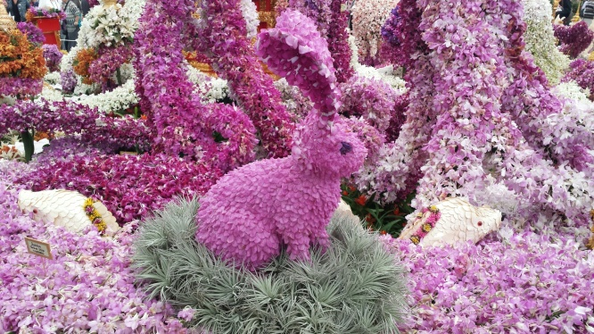 BunnyOrchidRHSChelsea2014NottingHillyummymummy