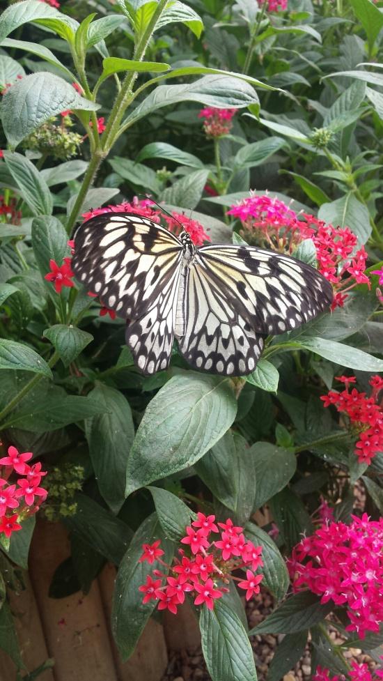 ButterflyexhibitNatHistoryMuseum1NHYM