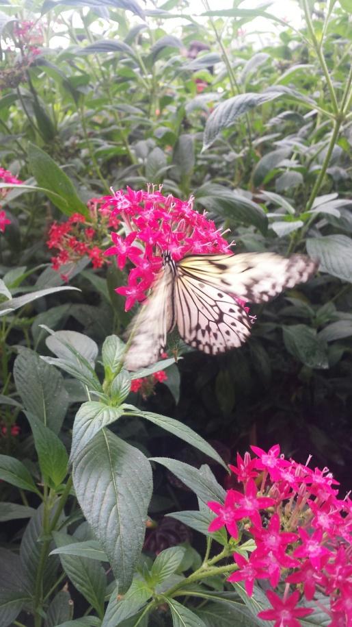 ButterflyexhibitNatHistoryMuseum2NHYM