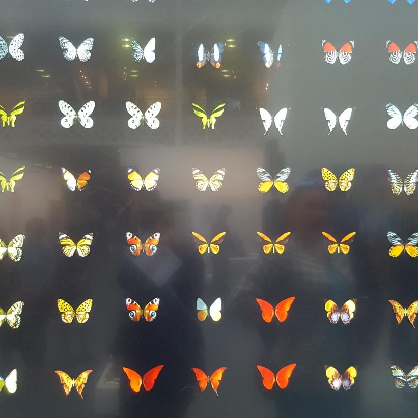 ButterfliesDominicHarrisArt16NHYM